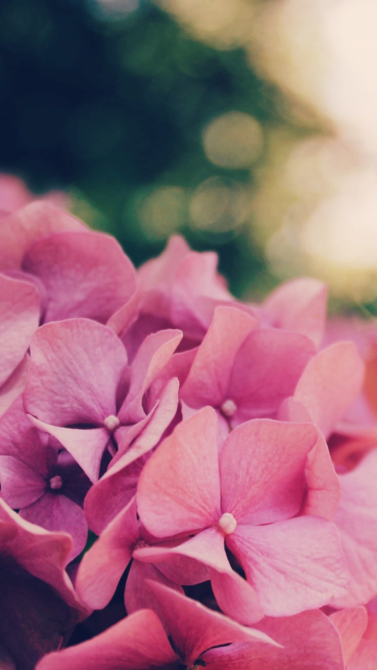 27 Floral Iphone 7 Plus Wallpapers For A Sunny Spring Preppy Wallpapers