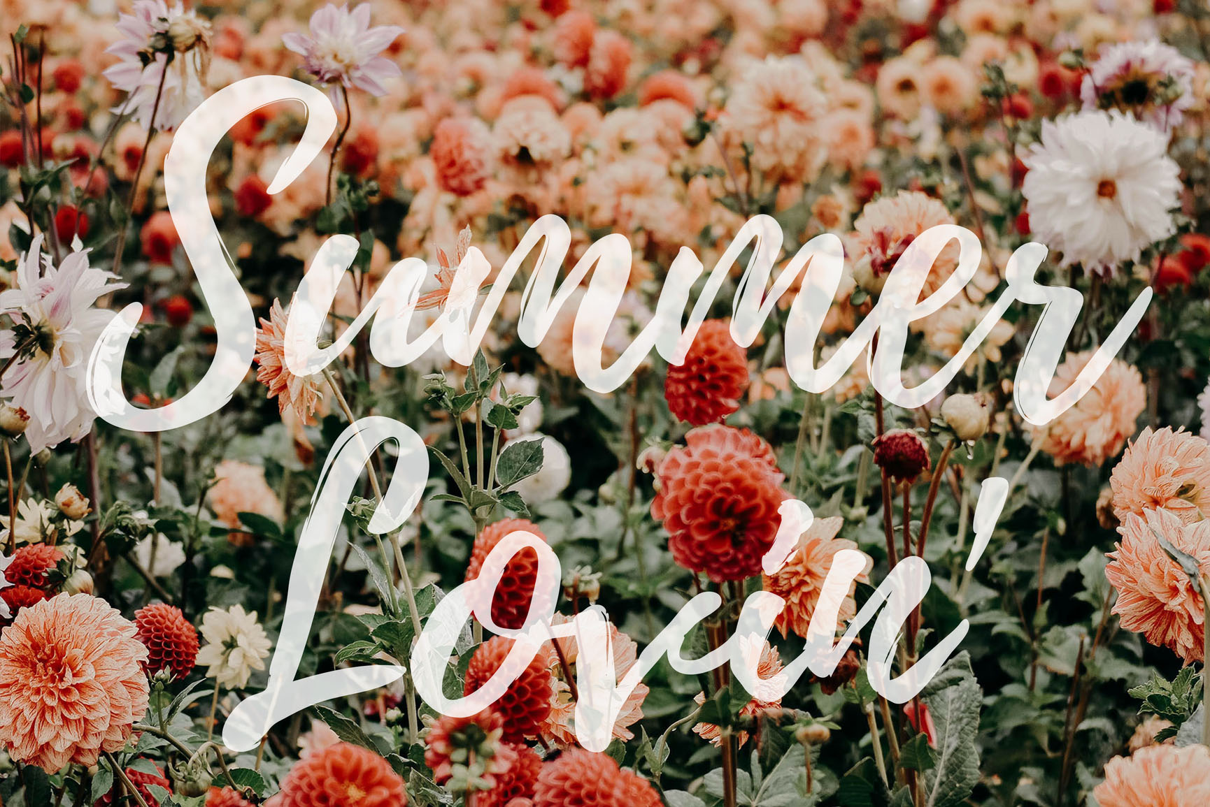 Summer Lovin' Quotes iPhone Wallpaper Collection