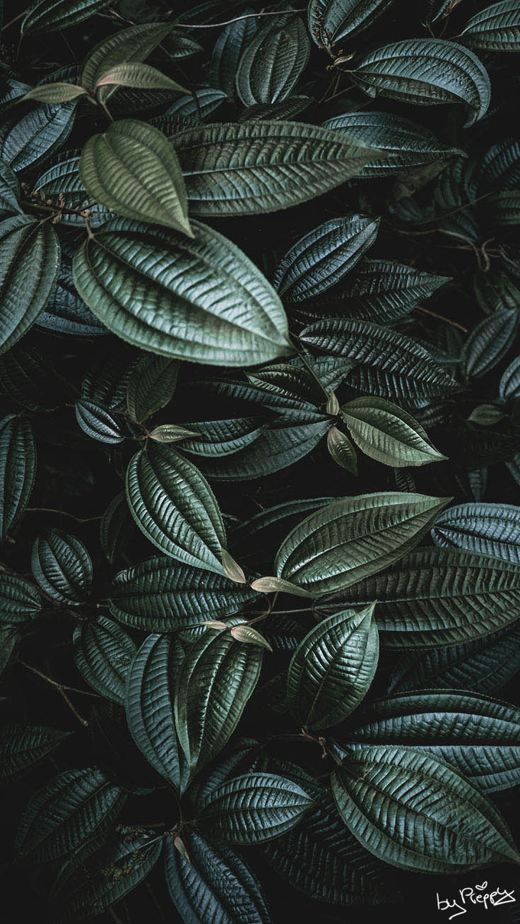 10 Tropical Jungle iPhone X Wallpapers by Preppy Wallpapers
