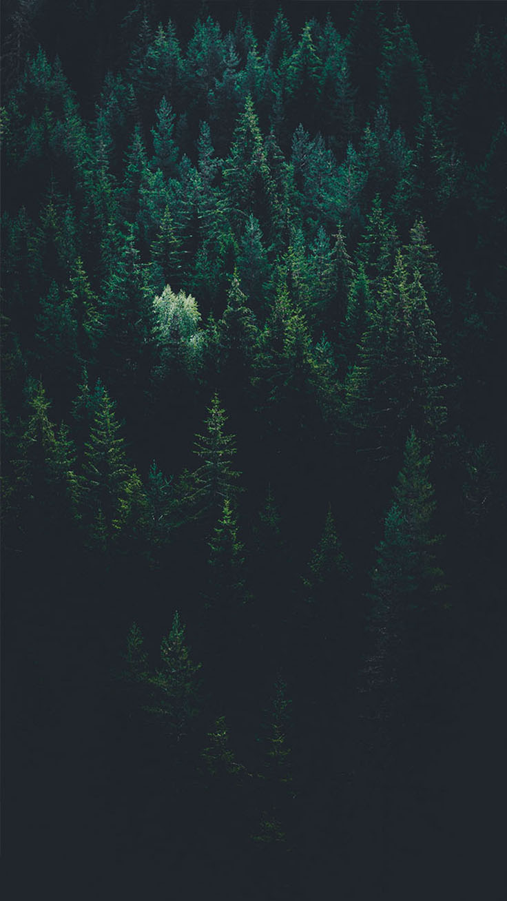 Bringing The Forest To You With 9 Free Iphone X Wallpapers Preppy Wallpapers