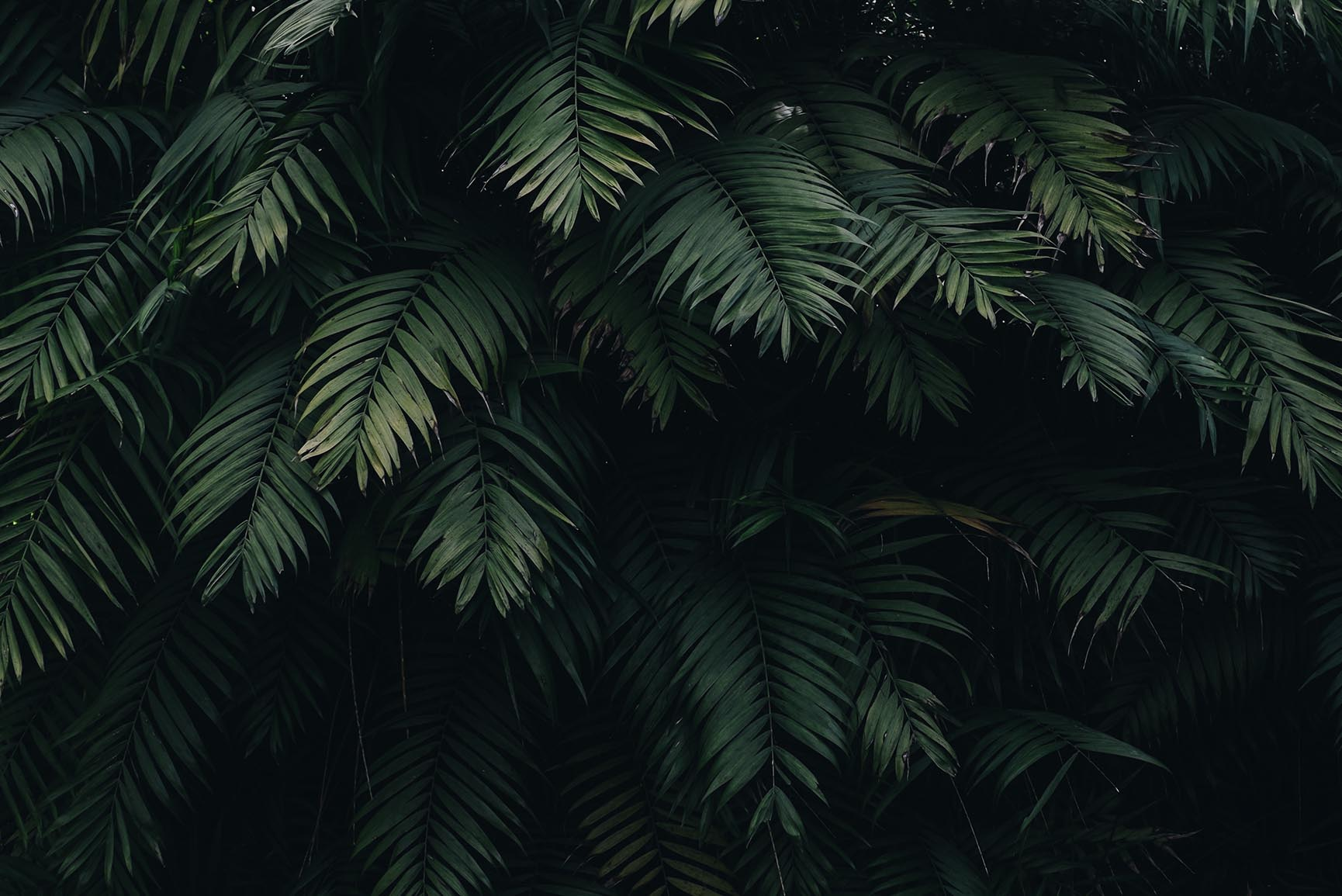 10 Tropical Jungle iPhone X Wallpapers