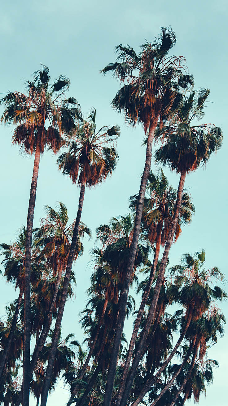 Palm Tree iPhone Wallpaper Collection by www.preppywallpapers.com
