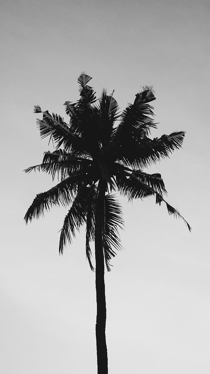 Let S Go Coconuts Enjoy 10 Tropical Iphone Wallpapers