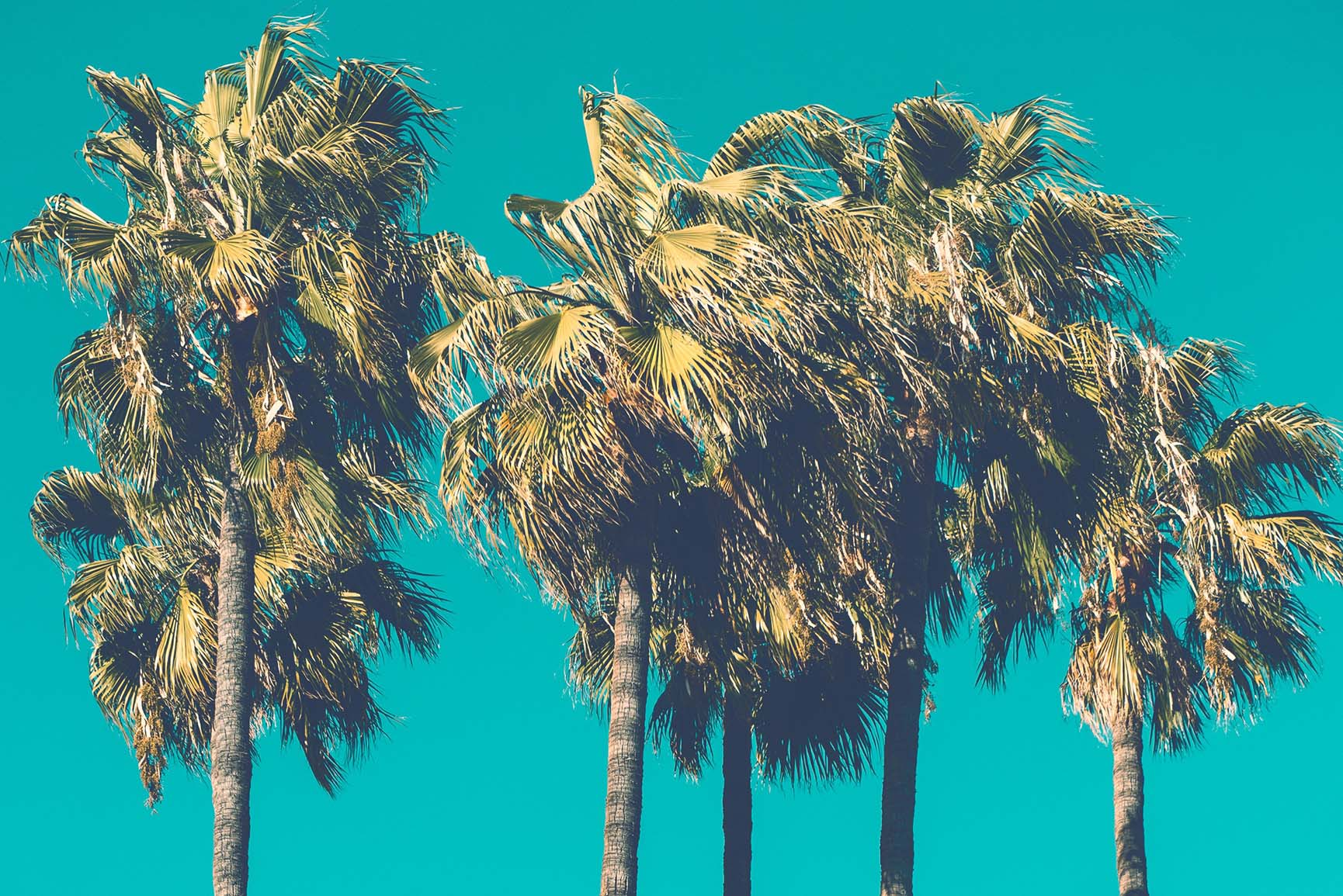 Let's Go Coconuts with 10 Tropical Palm Tree iPhone Wallpapers
