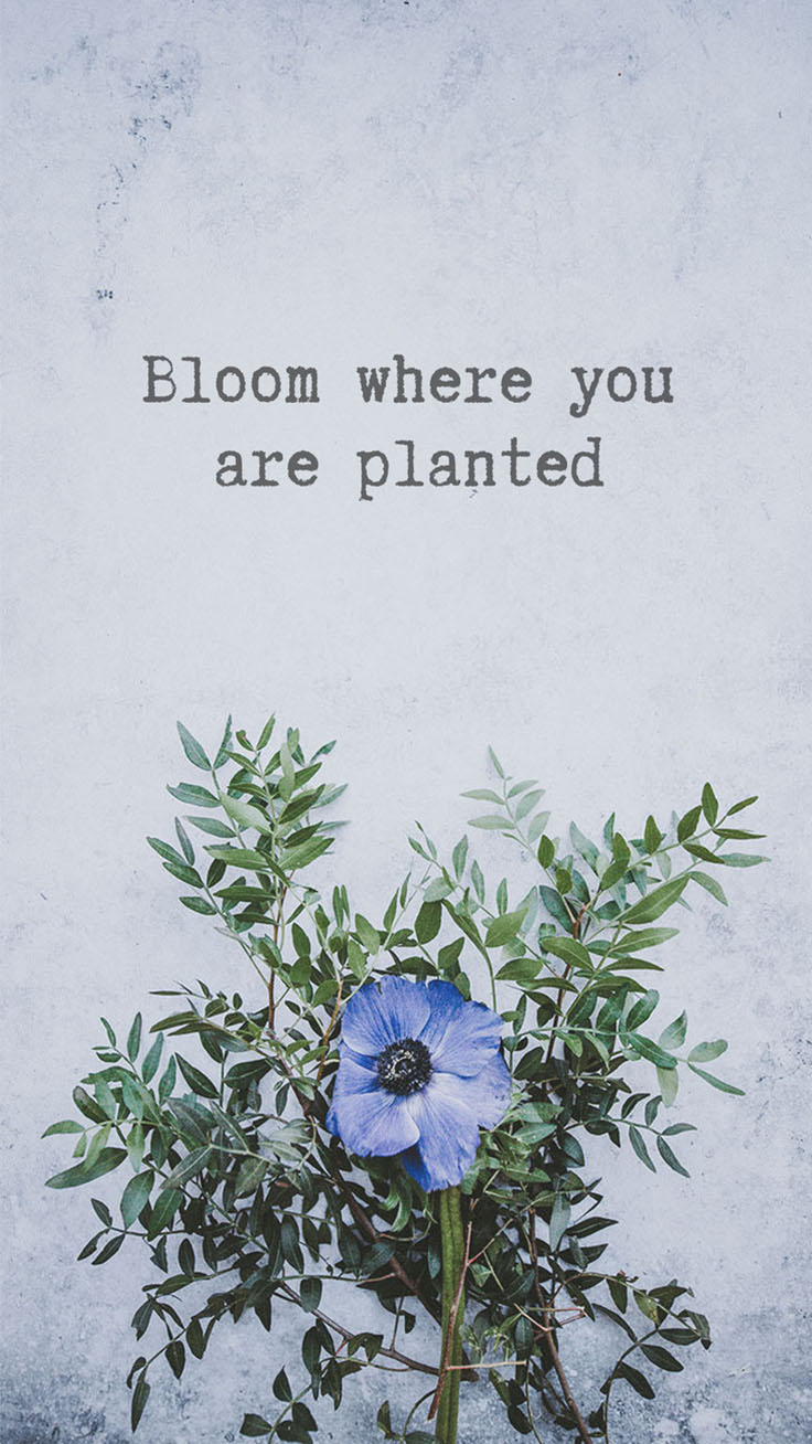 Floral Quotes Wallpaper Collection by www.preppywallpapers.com