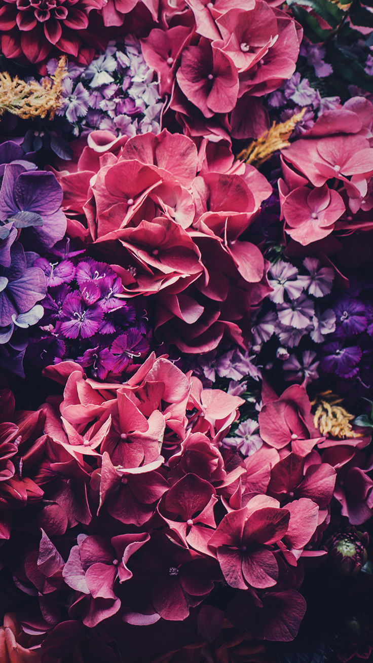 5 Floral iPhone Wallpapers To Celebrate 65k Pinterest ...