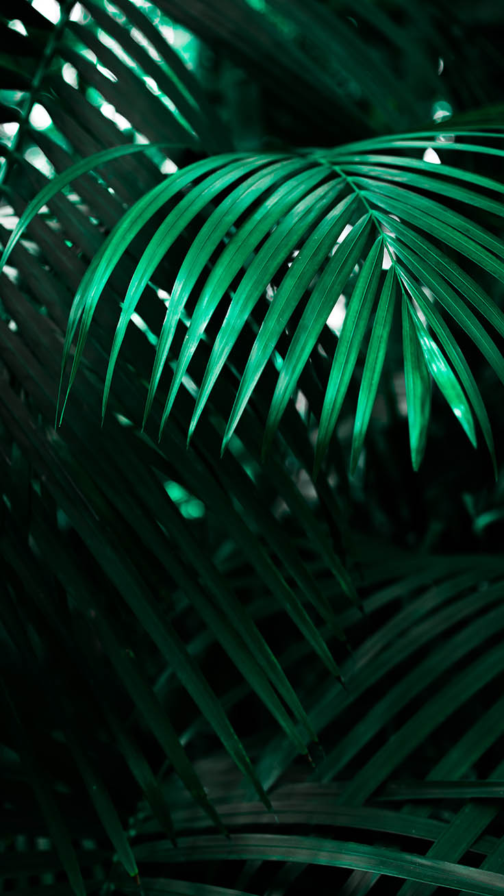Jungle iPhone Wallpaper by Preppy Wallpapers