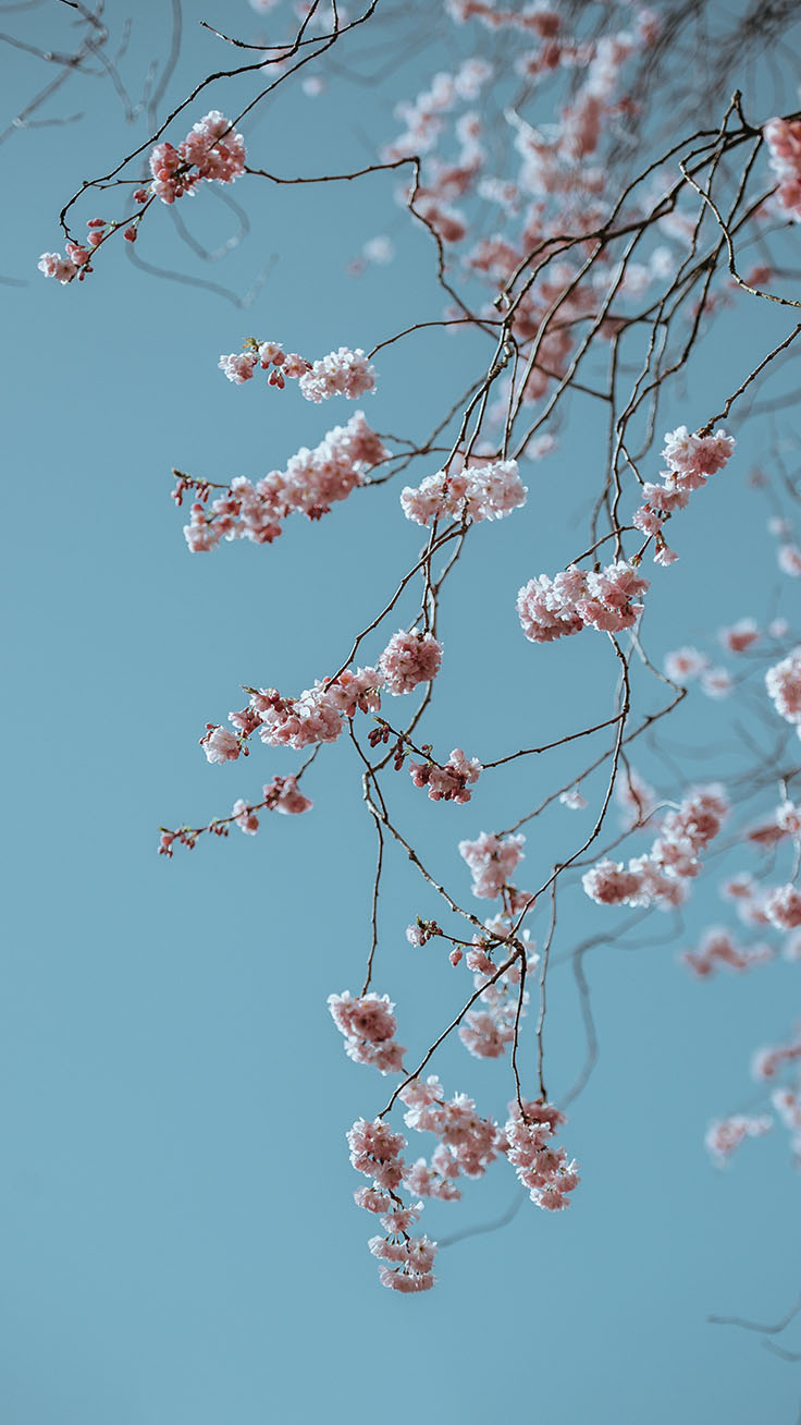 Spring iPhone Wallpaper by Preppy Wallpapers