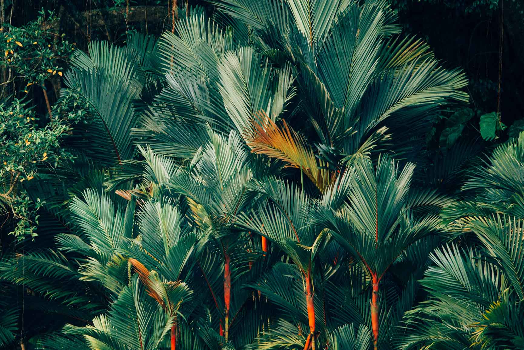 Welcome To The Jungle iPhone Xs Max Wallpapers
