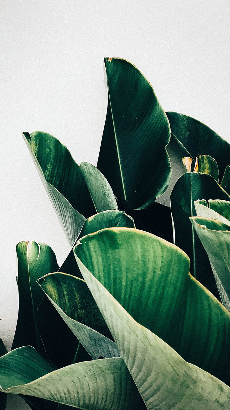 Botanical iPhone Wallpapers by Preppy Wallpapers