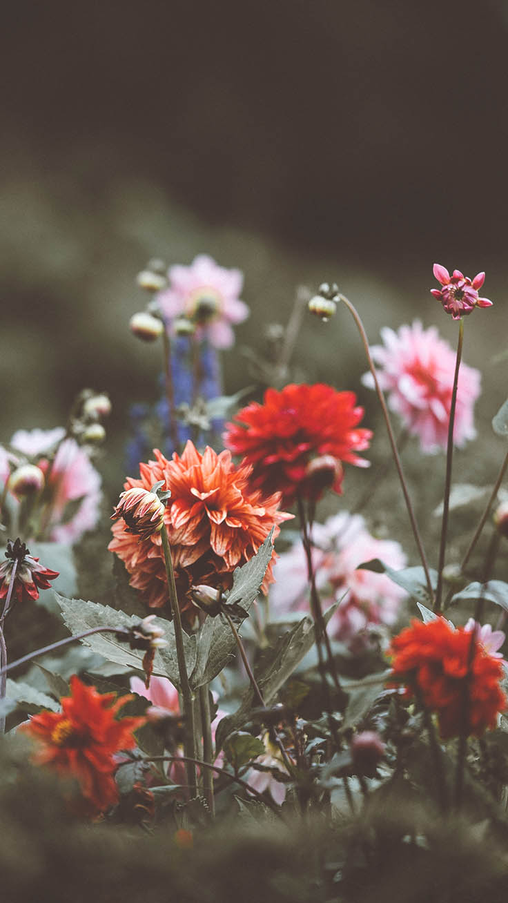 Wildflower iPhone Xs Wallpaper Collection by Preppy Wallpapers #iphone #iphonexs #floral #flowers