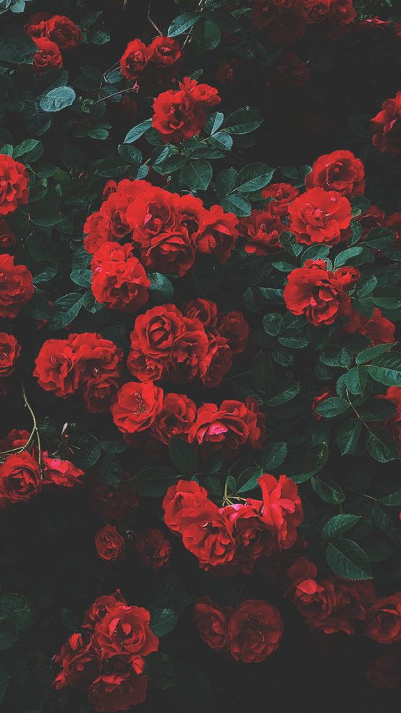 Red Roses iPhone Wallpaper - Top 25 Most Downloaded Preppy Wallpapers of 2019