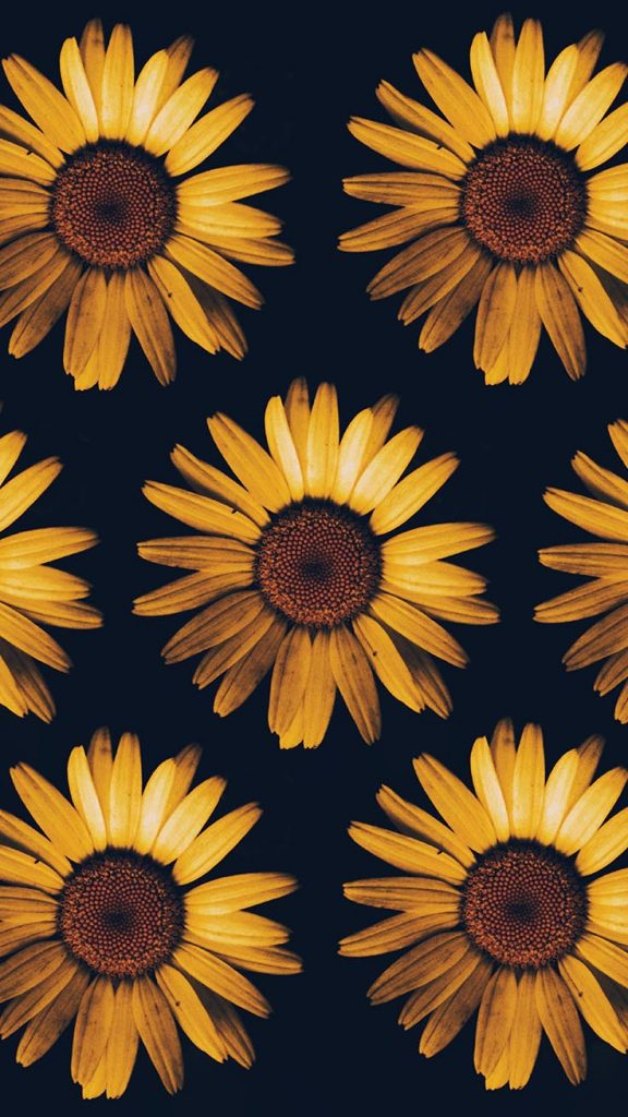 Sunflower iPhone Wallpaper - Top 25 Most Downloaded Preppy Wallpapers of 2019